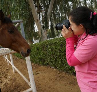 Equine PhotographyA